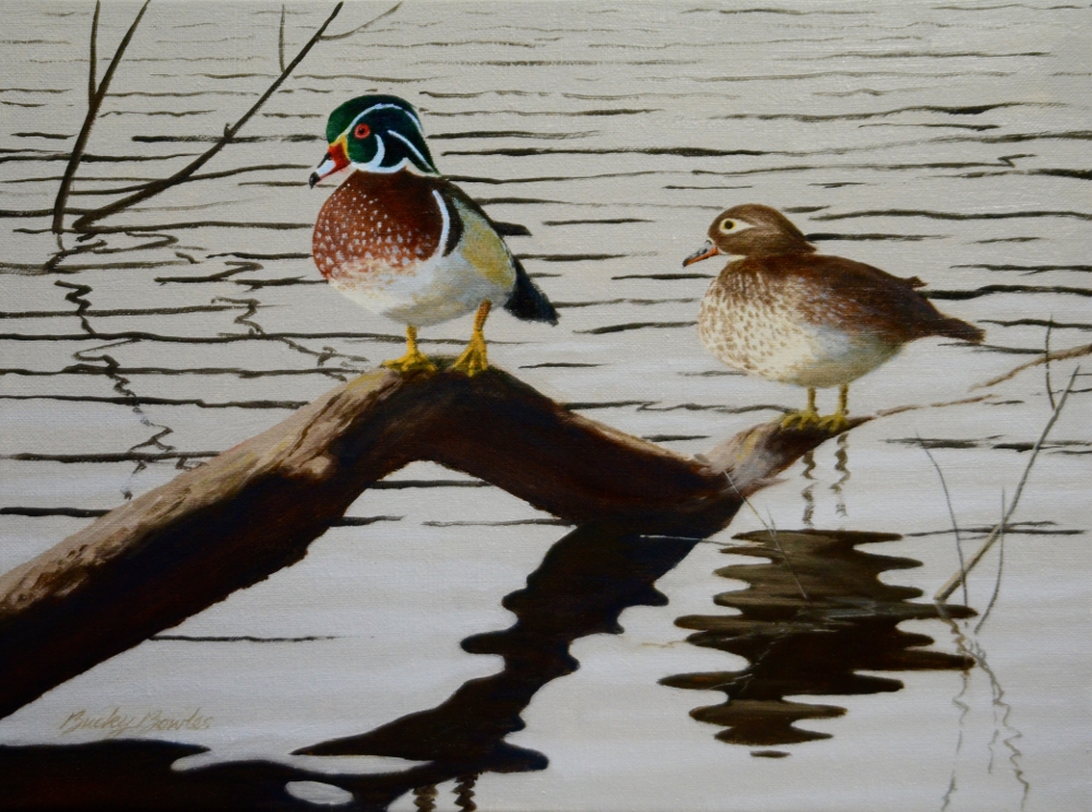 Resting Wood Ducks